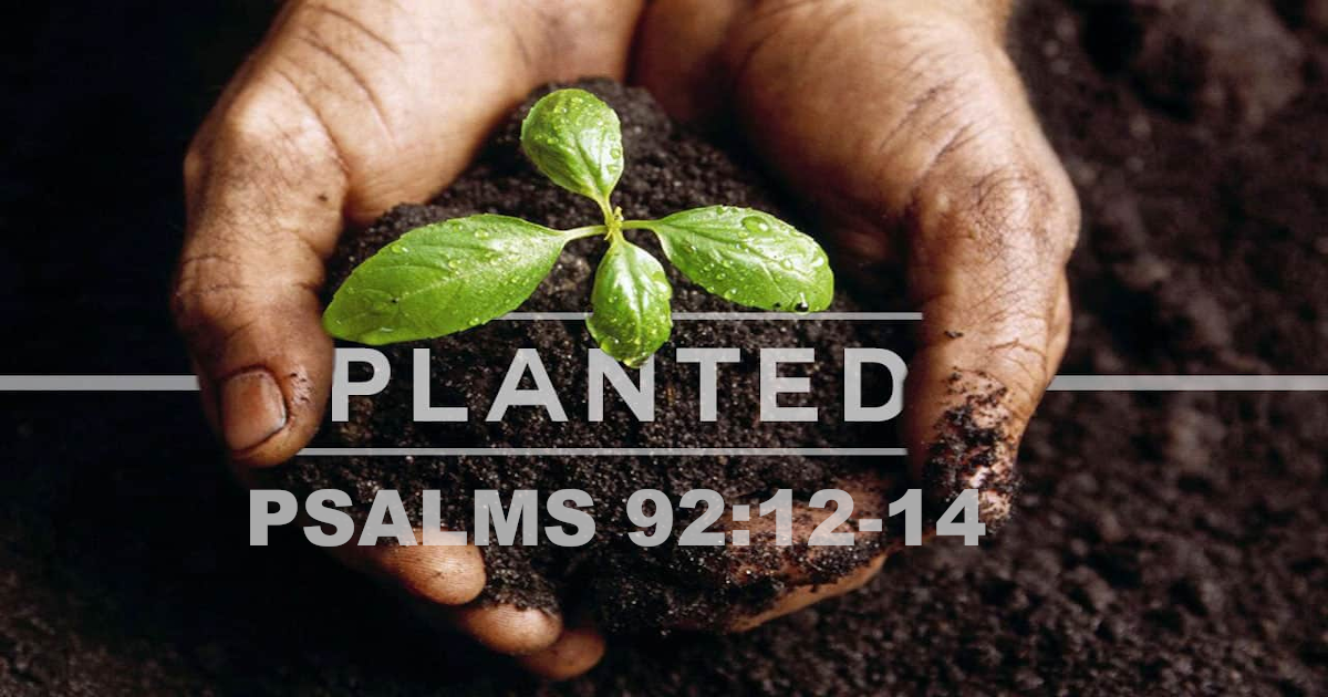 Planted – Part 1